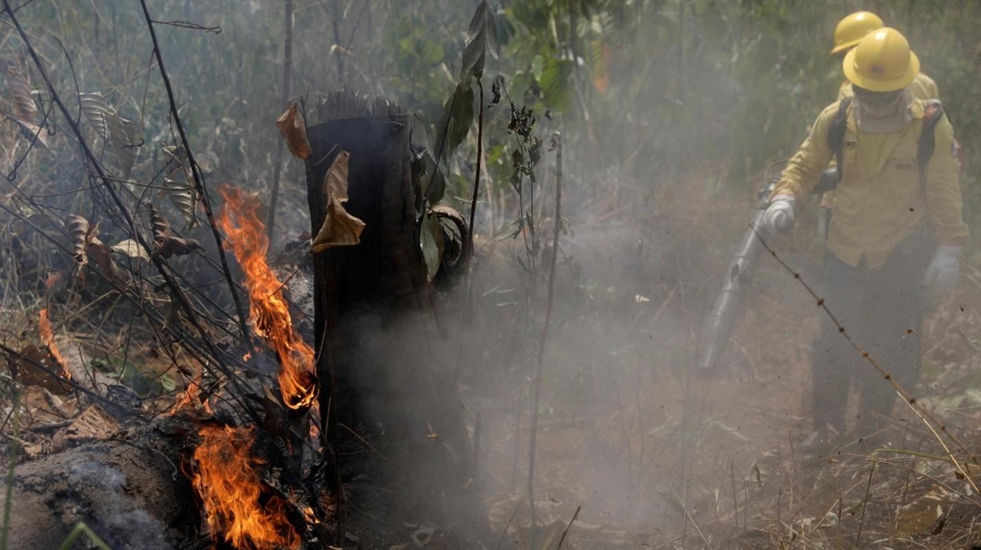 Chay rung Amazon du doi, Brazil tuc toc dieu chien dau co dap lua-Hinh-2