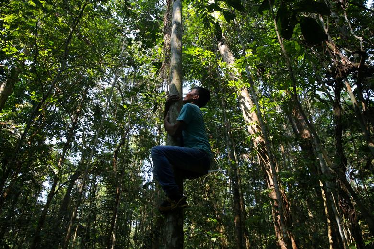 Khon kho cuoc song bo lac Amazon vi chay rung du doi-Hinh-4
