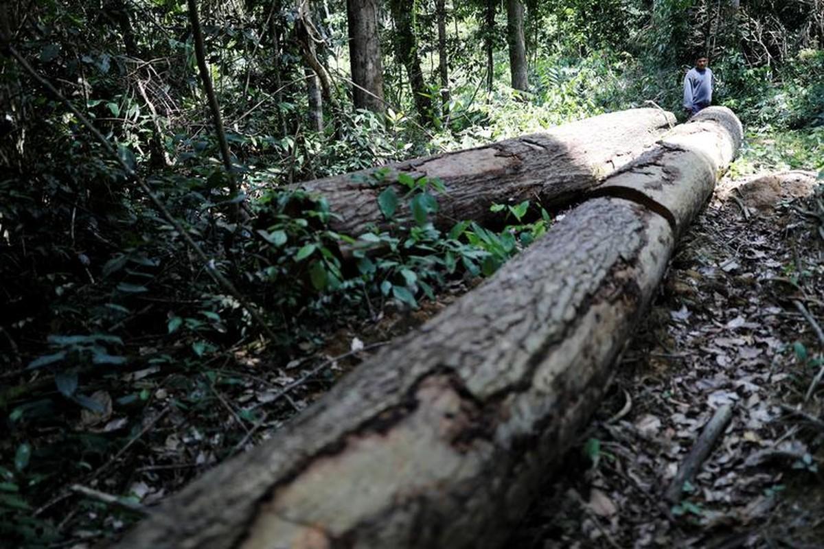 Khon kho cuoc song bo lac Amazon vi chay rung du doi-Hinh-6