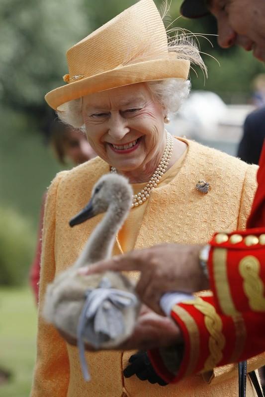 Nu hoang Anh Elizabeth II va tinh yeu doi voi dong vat-Hinh-10