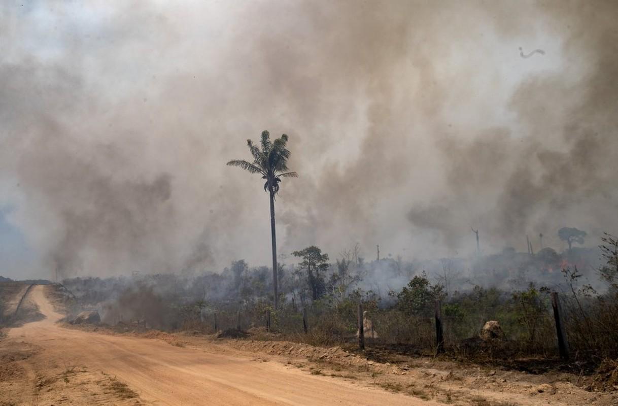 Can canh rung Amazon van chay sau mot nam-Hinh-9
