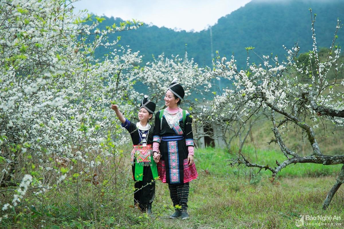 Hoa man no trang troi o mien Tay Nghe An cho don Tet-Hinh-9