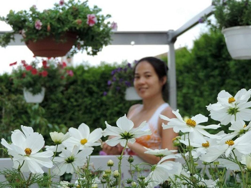 Vuon hoa dep me ly cua gia dinh Viet o Thuy Si-Hinh-10