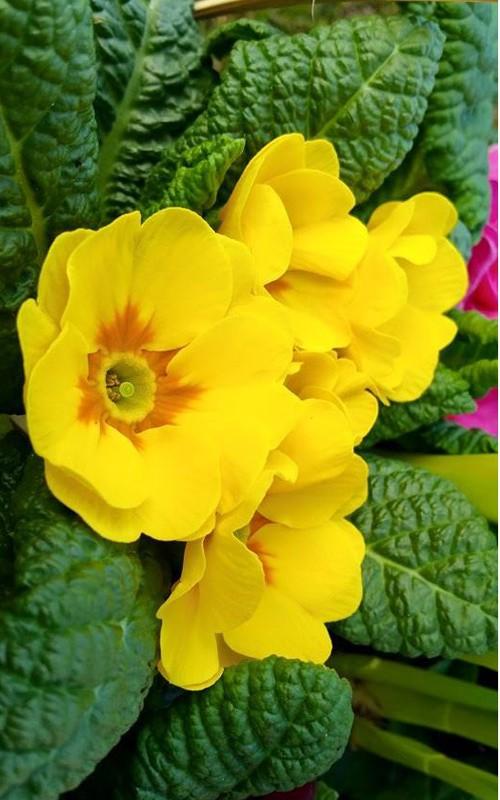 Vuon hoa dep me ly cua gia dinh Viet o Thuy Si-Hinh-12