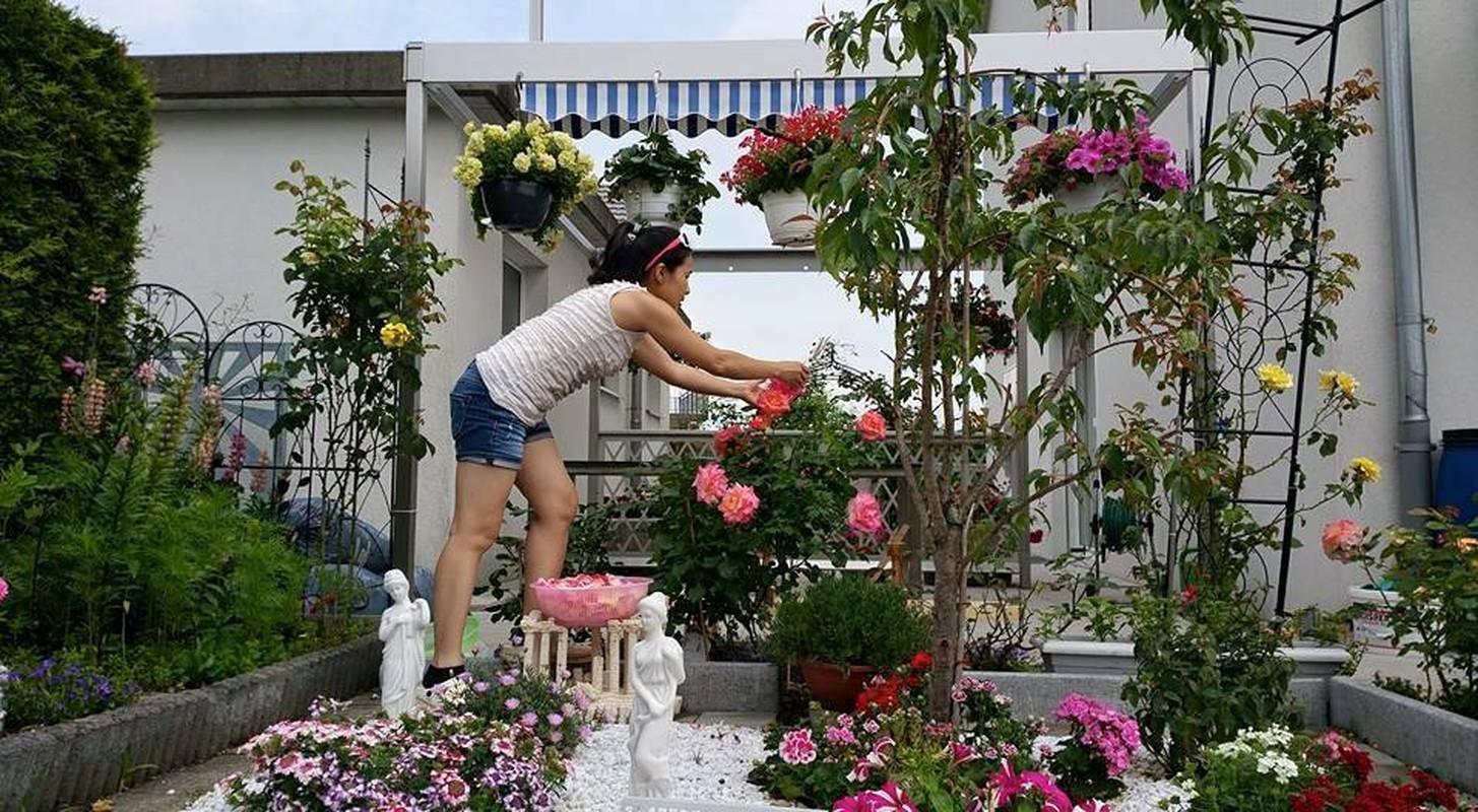 Vuon hoa dep me ly cua gia dinh Viet o Thuy Si-Hinh-8