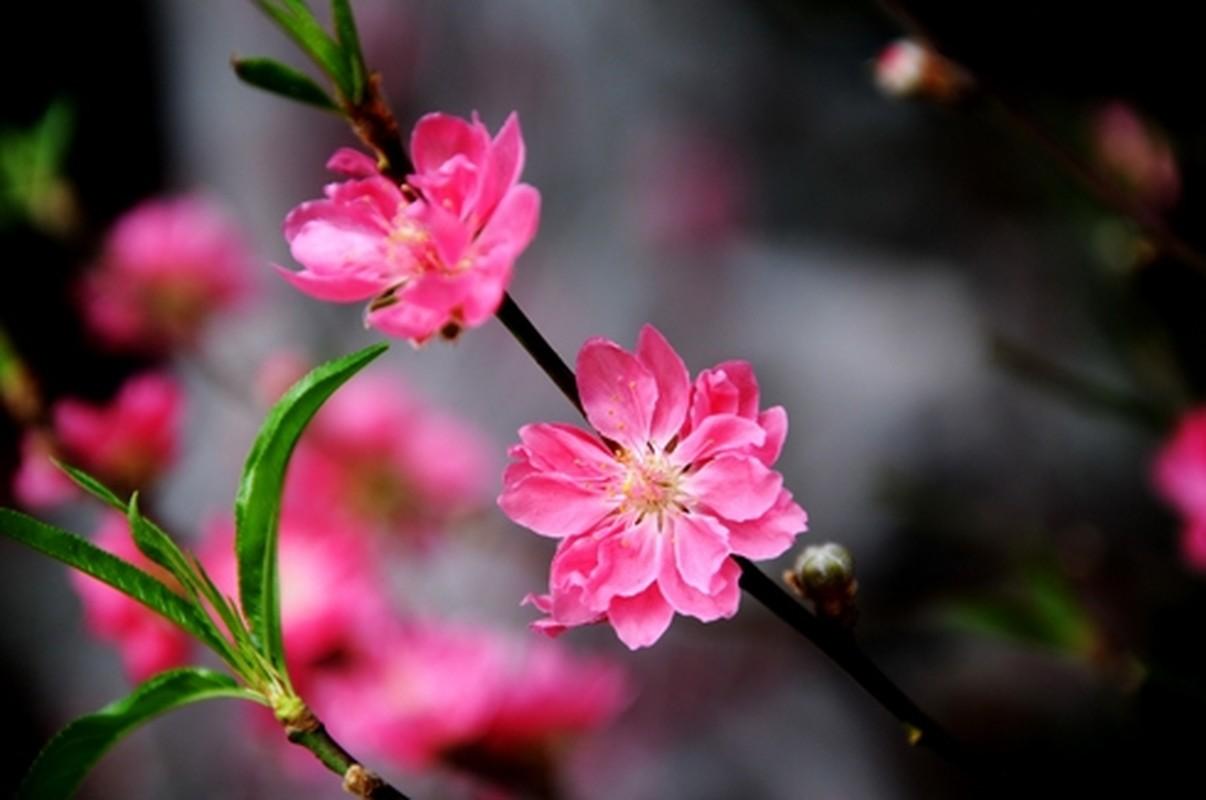 Nhung loai hoa ngay Tet nen chung trong nha de don tai loc-Hinh-2