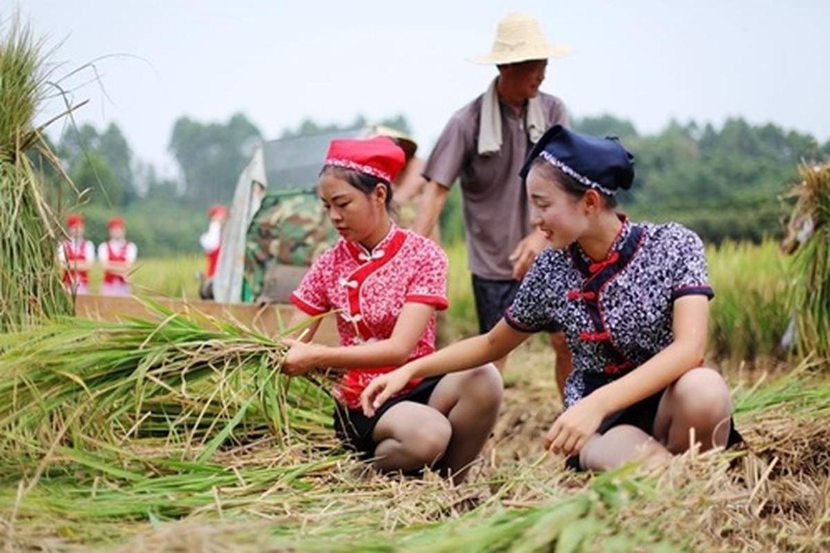 Tiep vien hang khong di giay cao got gat lua gay bao-Hinh-3