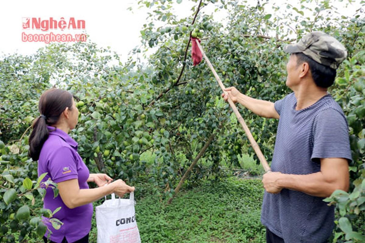 Diem danh hoa qua que hut khach dip Tet-Hinh-5