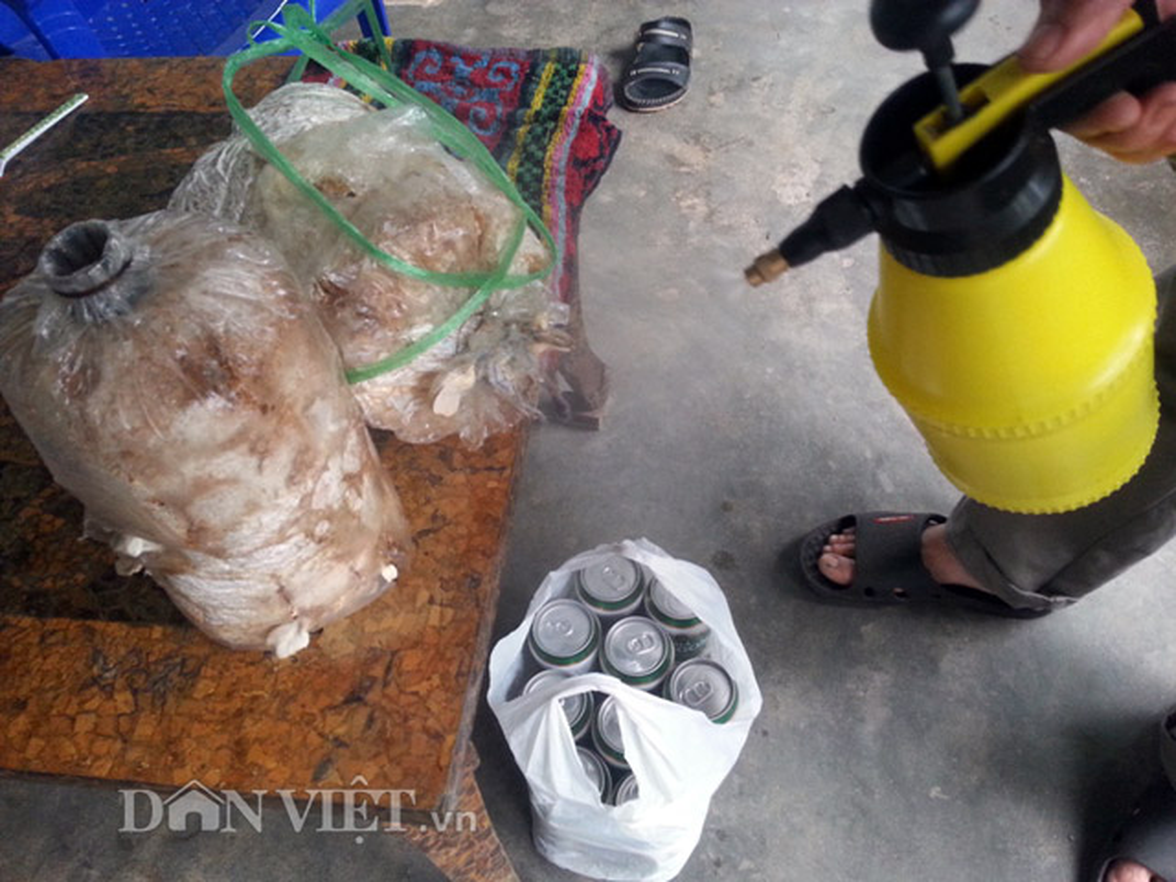 Chieu doc: Dung bia de tuoi cay, bon nam o Phu Yen-Hinh-3