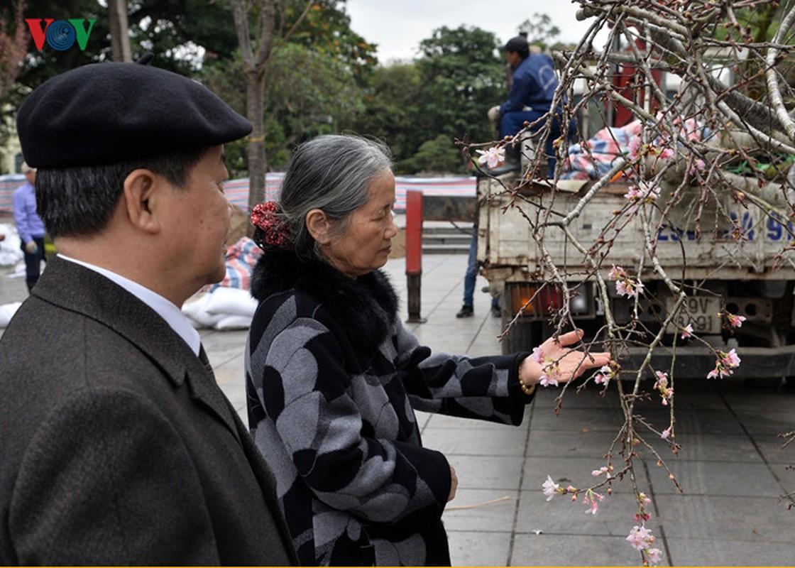 Nhung cay hoa anh dao Nhat Ban duoc chuyen ve vuon hoa Ly Thai To-Hinh-15