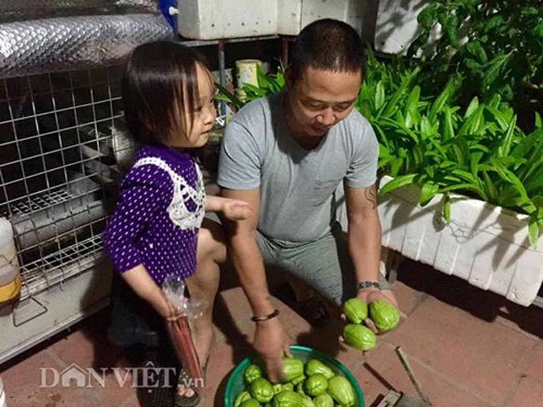 Vuon cay trai triu gian tren san thuong cua ong bo Thu do-Hinh-7