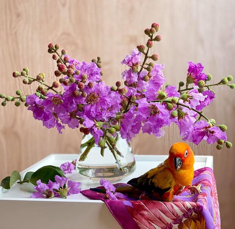 Chan cam hoa, dan mang co thu choi doc khien ai cung tram tro-Hinh-4