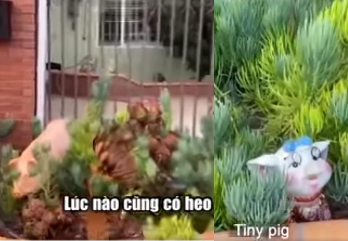 Ky vat tinh yeu tran ngap nha o My cua Chi Tai va ba xa-Hinh-4