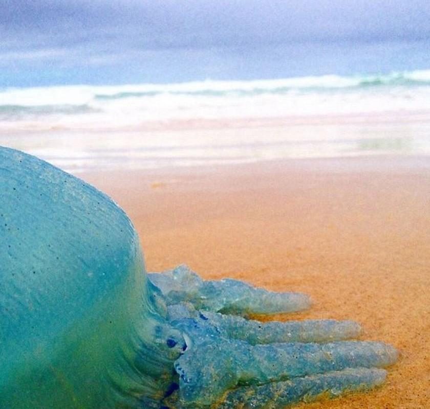 Dan sua xanh ram ro do bo vung bien Australia-Hinh-3