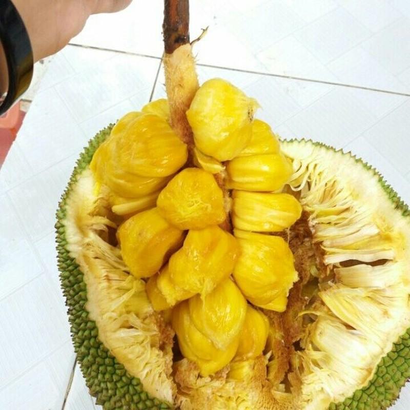 Kham pha thu vi ve giong mit to nu, dac san Long Khanh-Hinh-2