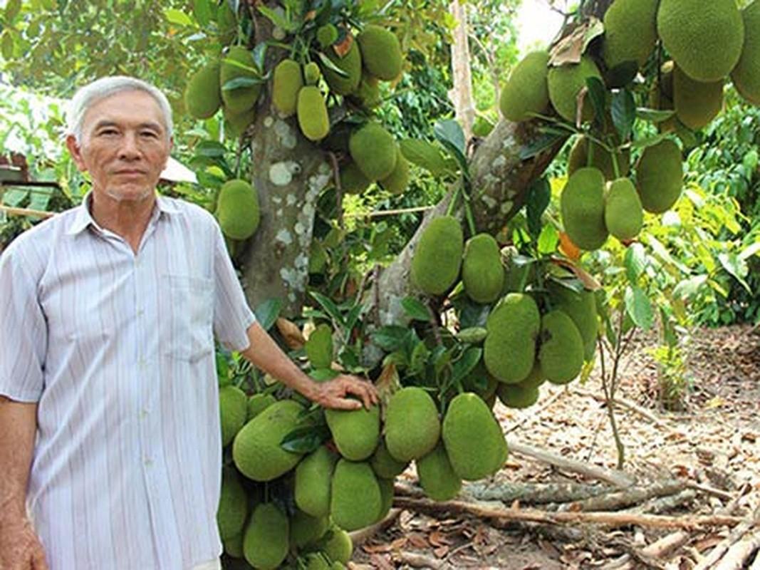 Kham pha thu vi ve giong mit to nu, dac san Long Khanh-Hinh-5