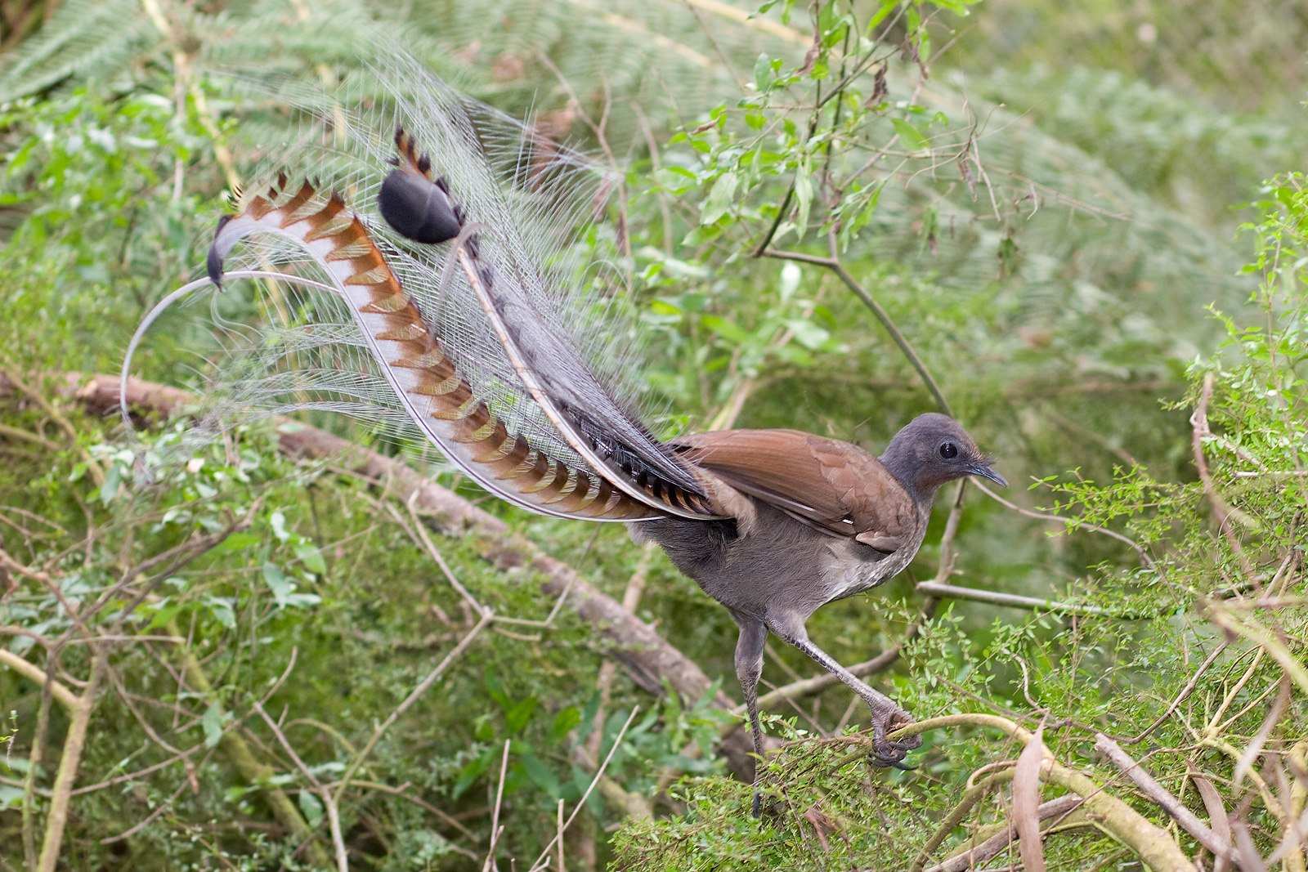 Thu vi loai chim di hinh luong tinh manh, in tren tien xu-Hinh-6