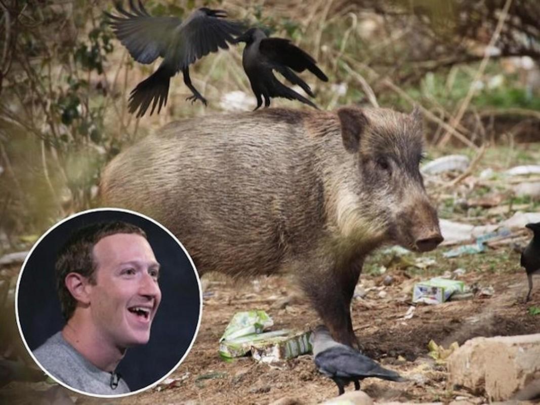Ong chu Facebook Mark Zuckerberg de lo so thich ky la khien ai cung soc-Hinh-2