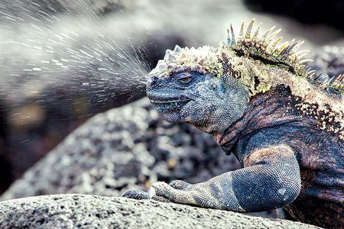 Quai vat Godzilla ngoai doi thuc hoa ra o ngay gan con nguoi-Hinh-3