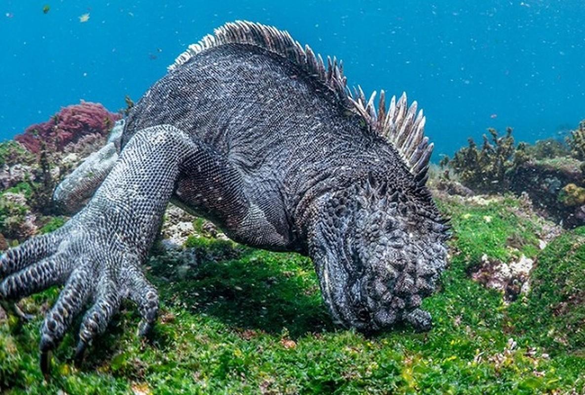 Quai vat Godzilla ngoai doi thuc hoa ra o ngay gan con nguoi-Hinh-4