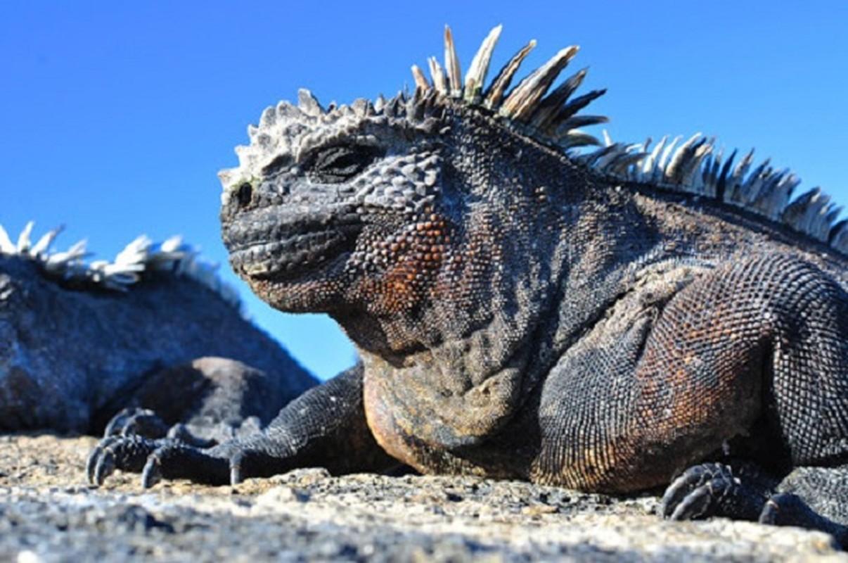 Quai vat Godzilla ngoai doi thuc hoa ra o ngay gan con nguoi-Hinh-5