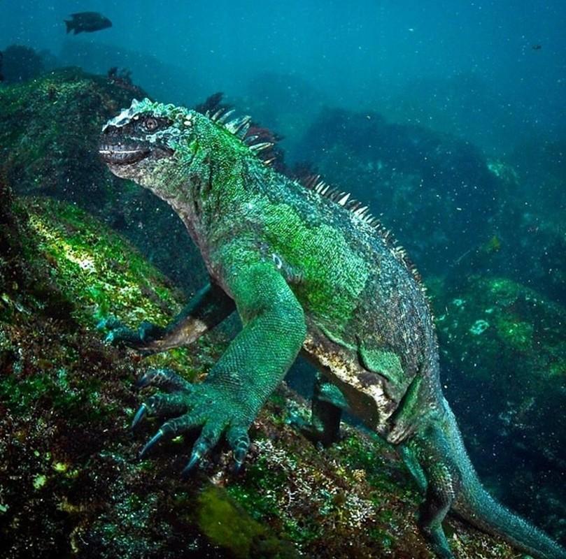 Quai vat Godzilla ngoai doi thuc hoa ra o ngay gan con nguoi-Hinh-6