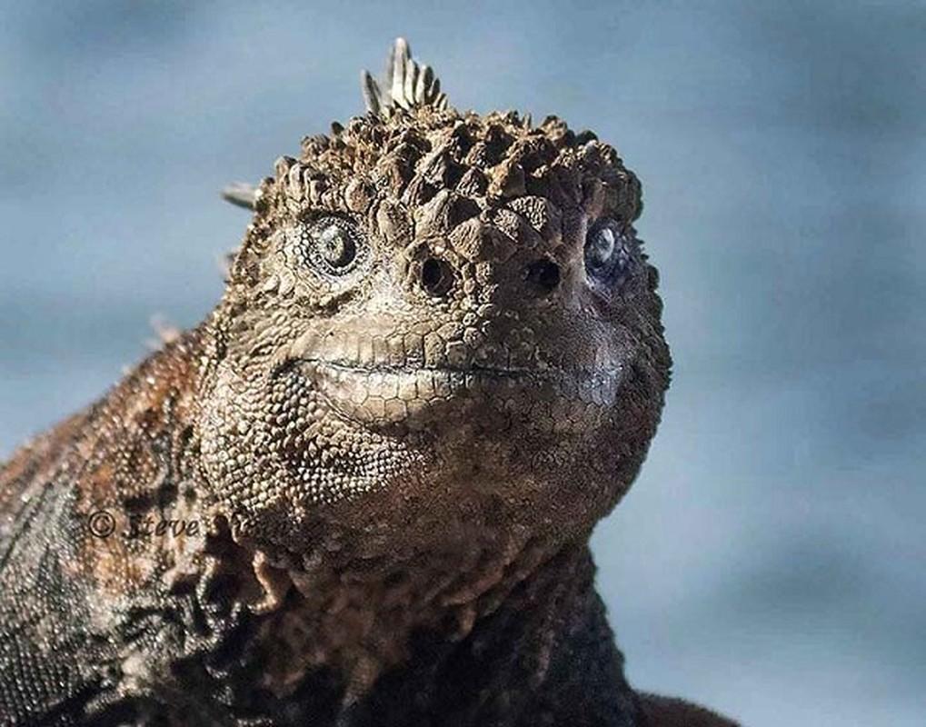 Quai vat Godzilla ngoai doi thuc hoa ra o ngay gan con nguoi-Hinh-7