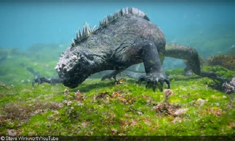 Quai vat Godzilla ngoai doi thuc hoa ra o ngay gan con nguoi-Hinh-8
