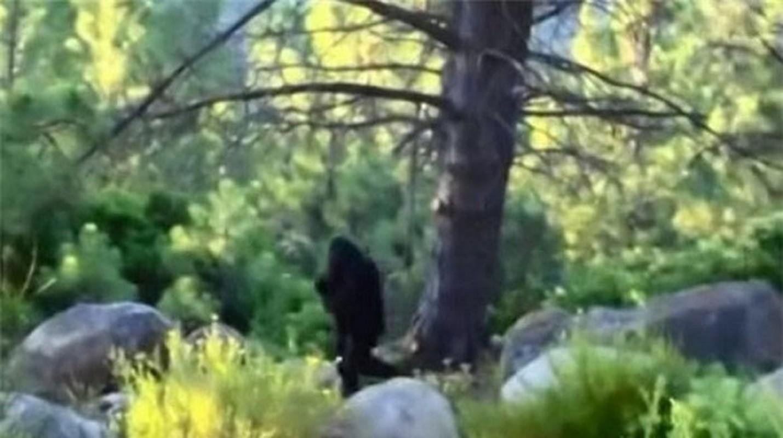 """""""Bat qua tang"""" nhung lan quai vat Bigfoot xuat hien... treu con nguoi-Hinh-4"""