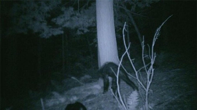"""""""Bat qua tang"""" nhung lan quai vat Bigfoot xuat hien... treu con nguoi-Hinh-6"""