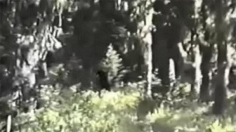 """""""Bat qua tang"""" nhung lan quai vat Bigfoot xuat hien... treu con nguoi-Hinh-8"""