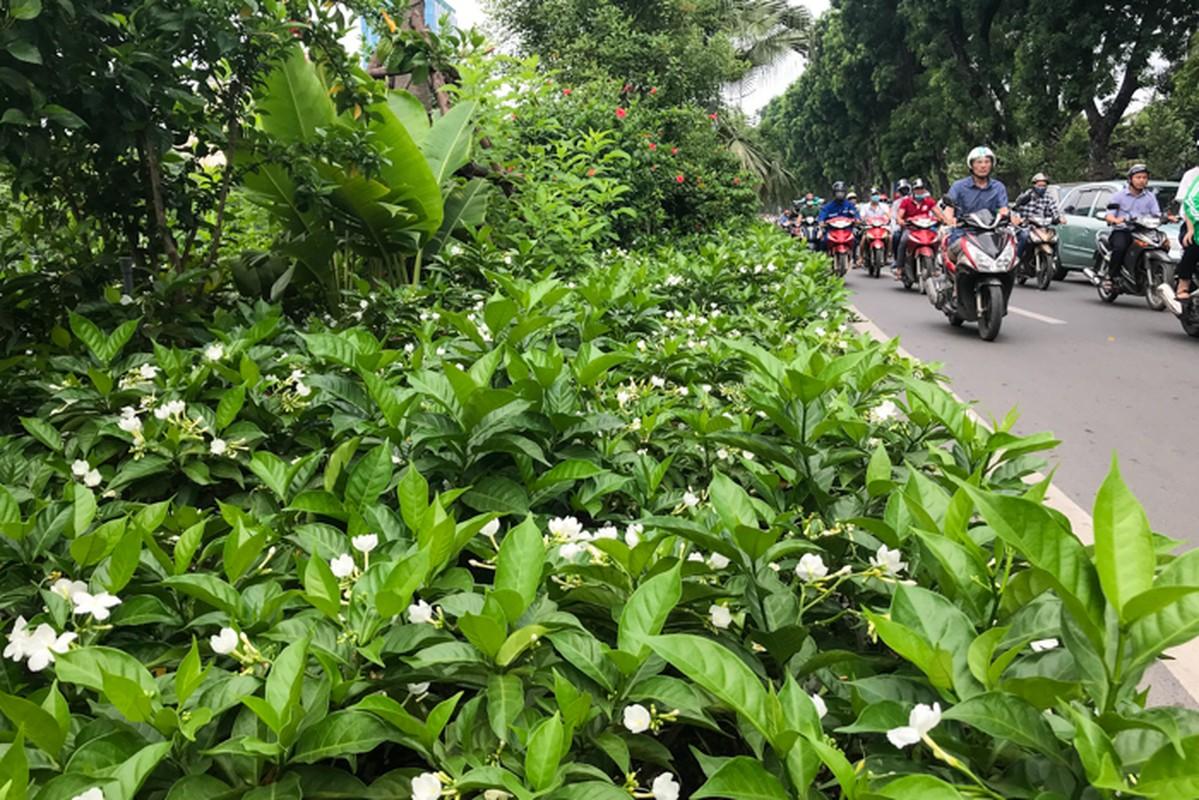 Can canh hang hoa nhai trong doc duong di bo ven song To Lich-Hinh-11