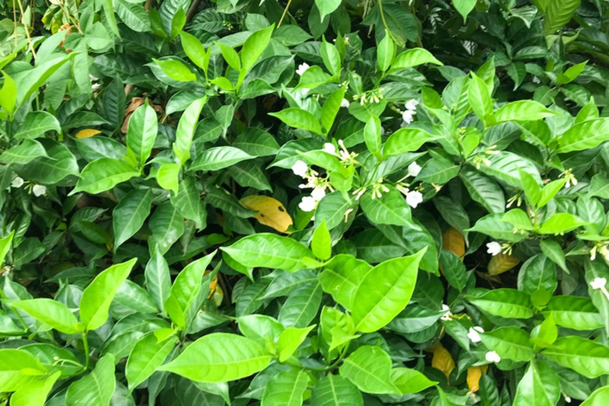 Can canh hang hoa nhai trong doc duong di bo ven song To Lich-Hinh-3