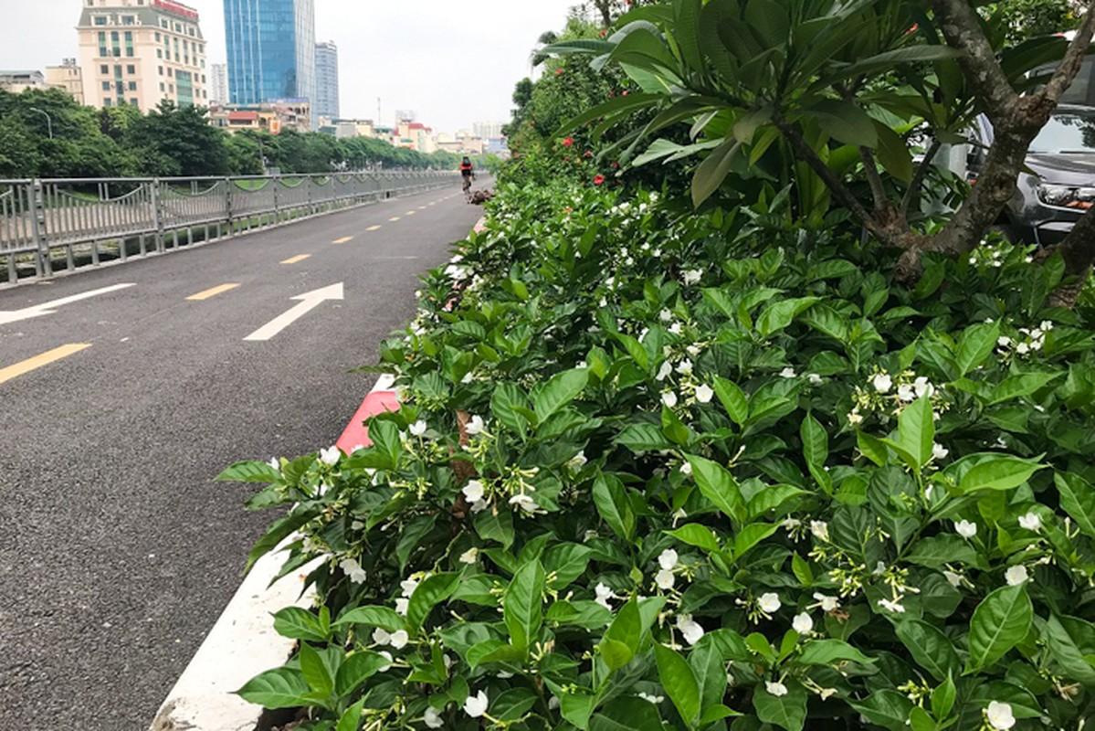 Can canh hang hoa nhai trong doc duong di bo ven song To Lich-Hinh-6