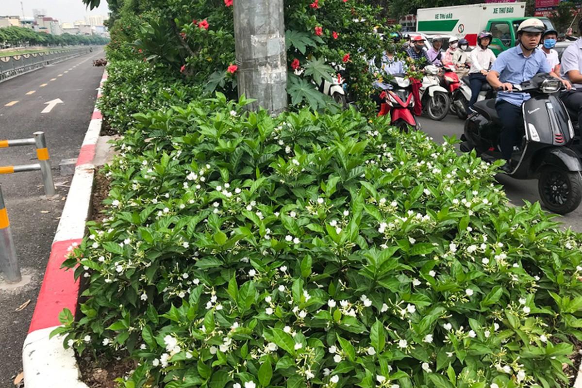 Can canh hang hoa nhai trong doc duong di bo ven song To Lich-Hinh-9