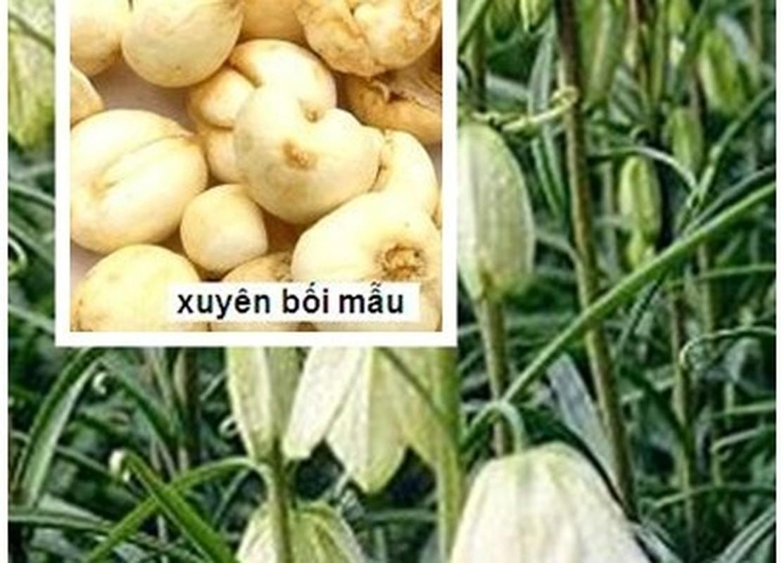 6 mon an bai thuoc tot tu luon chua benh lao phoi-Hinh-4