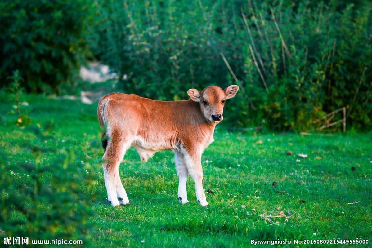 Dự đoán ngày 28/2/2021 cho 12 con giáp: Tỵ cẩn thận tiểu nhân chọc ngoáy