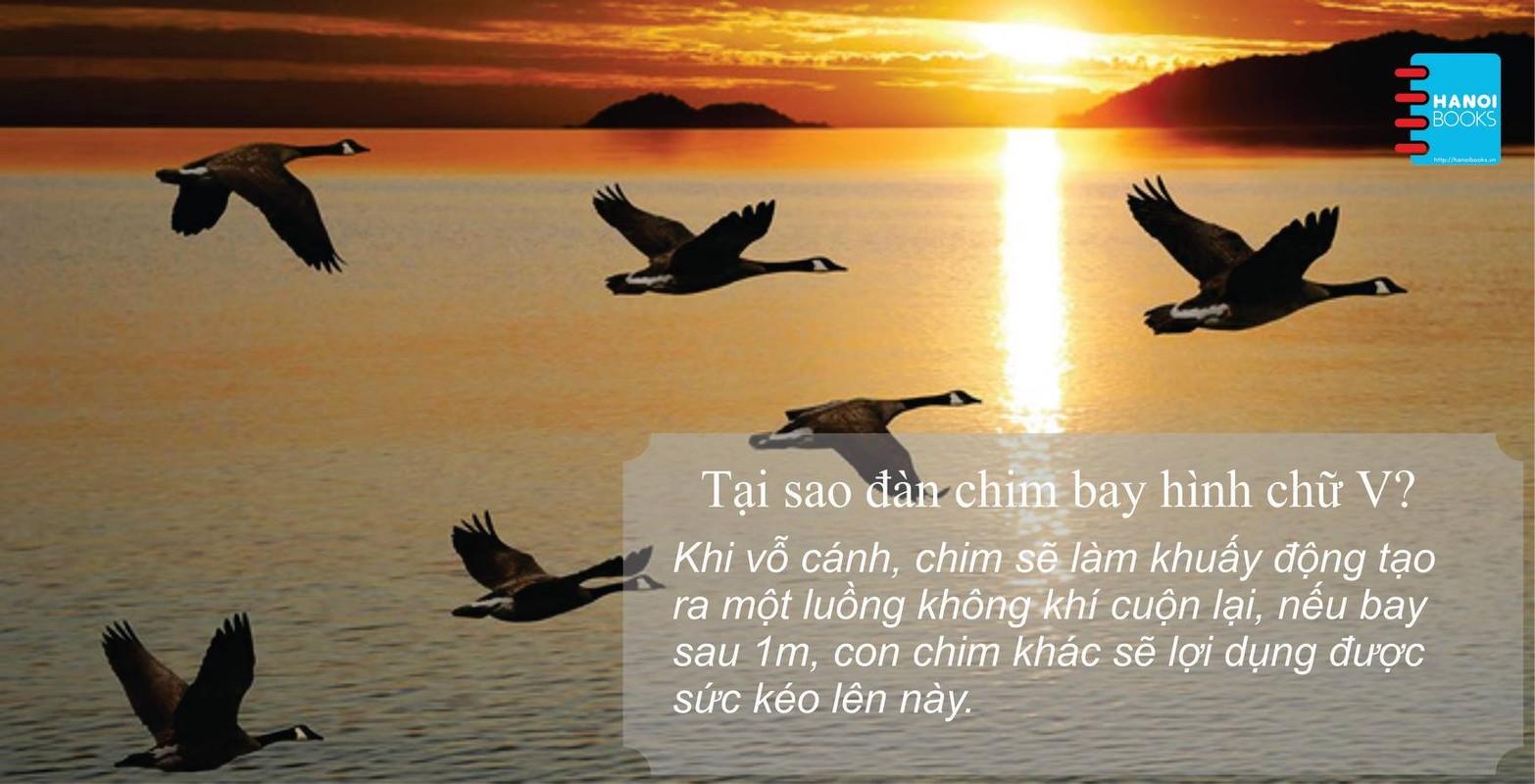 """Giao su """"biet tuot"""" Nguyen Lan Dung hoi dap ve moi chuyen-Hinh-7"""