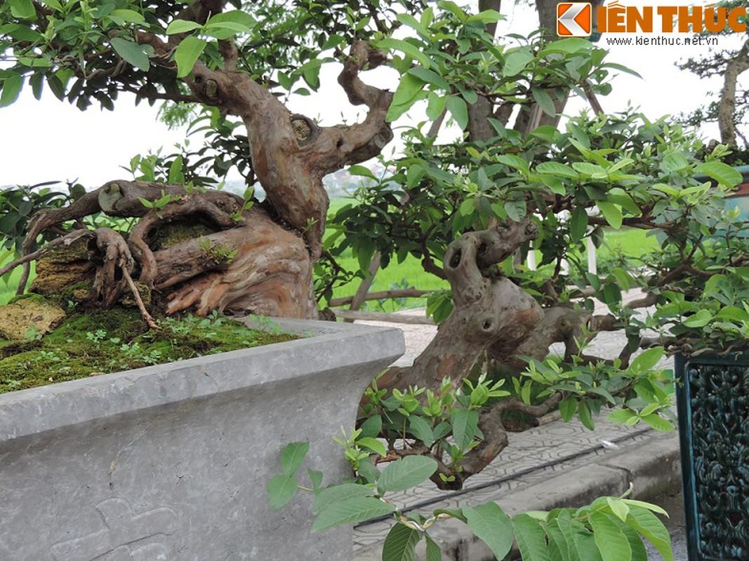Ngam bonsai oi dang the sieu dep-Hinh-2