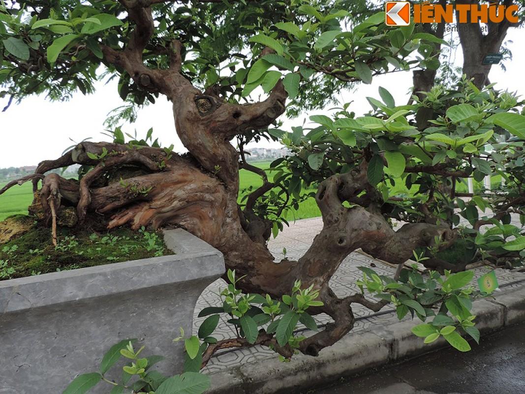 Ngam bonsai oi dang the sieu dep-Hinh-3