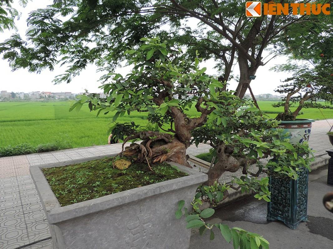 Ngam bonsai oi dang the sieu dep-Hinh-4
