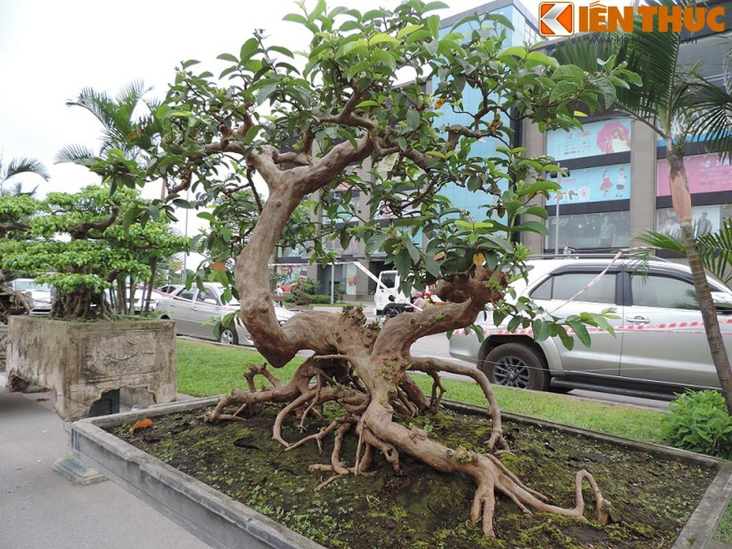 Ngam bonsai oi dang the sieu dep-Hinh-7