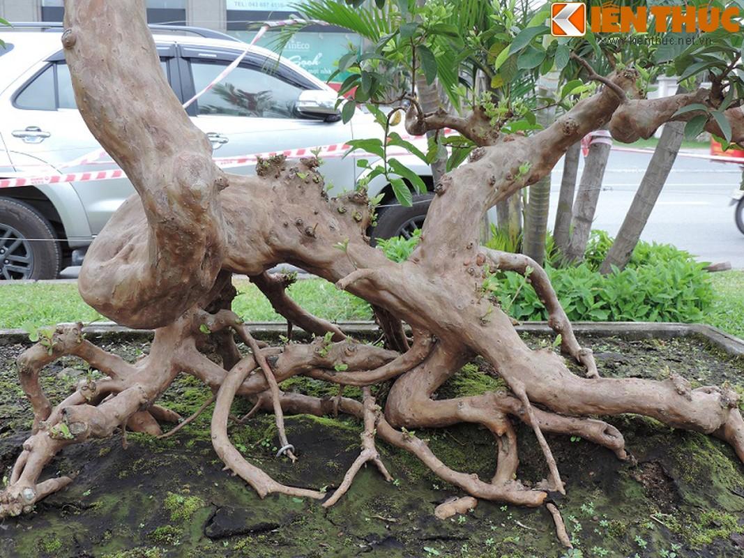 Ngam bonsai oi dang the sieu dep-Hinh-8