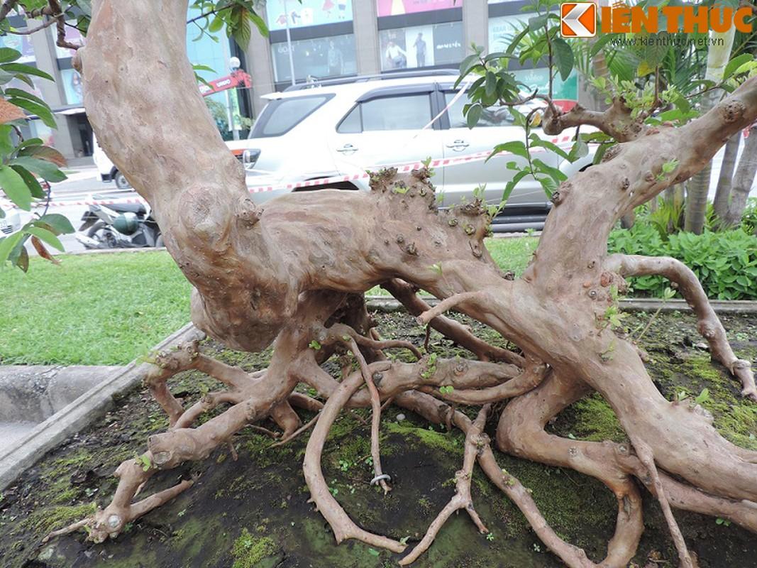 Ngam bonsai oi dang the sieu dep-Hinh-9