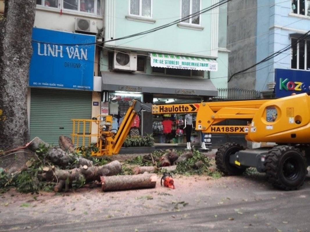 "Can canh xe cat tia cay gia ""soc"" o Ha Noi-Hinh-9"