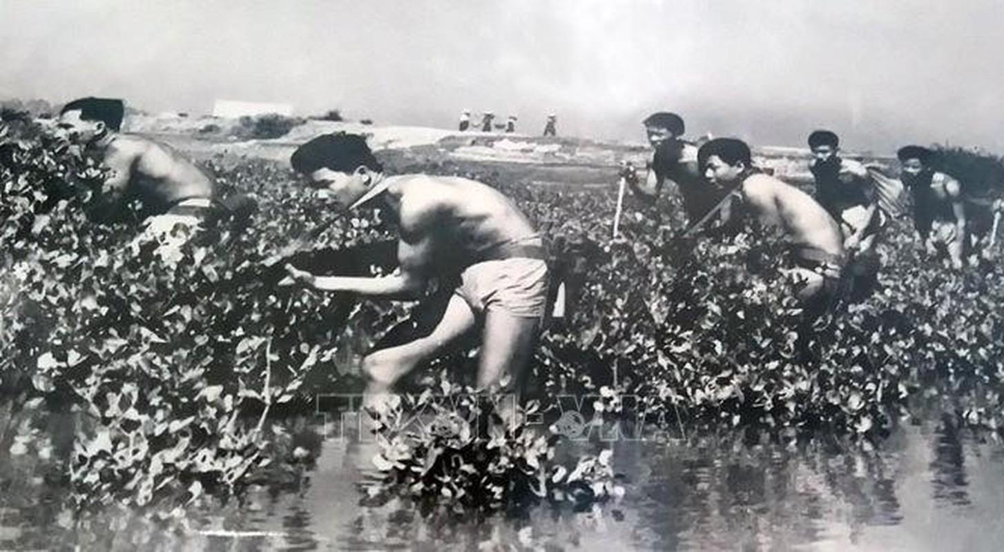 Chien tranh Viet Nam: Tran danh xung danh hau the Yet Kieu-Hinh-8