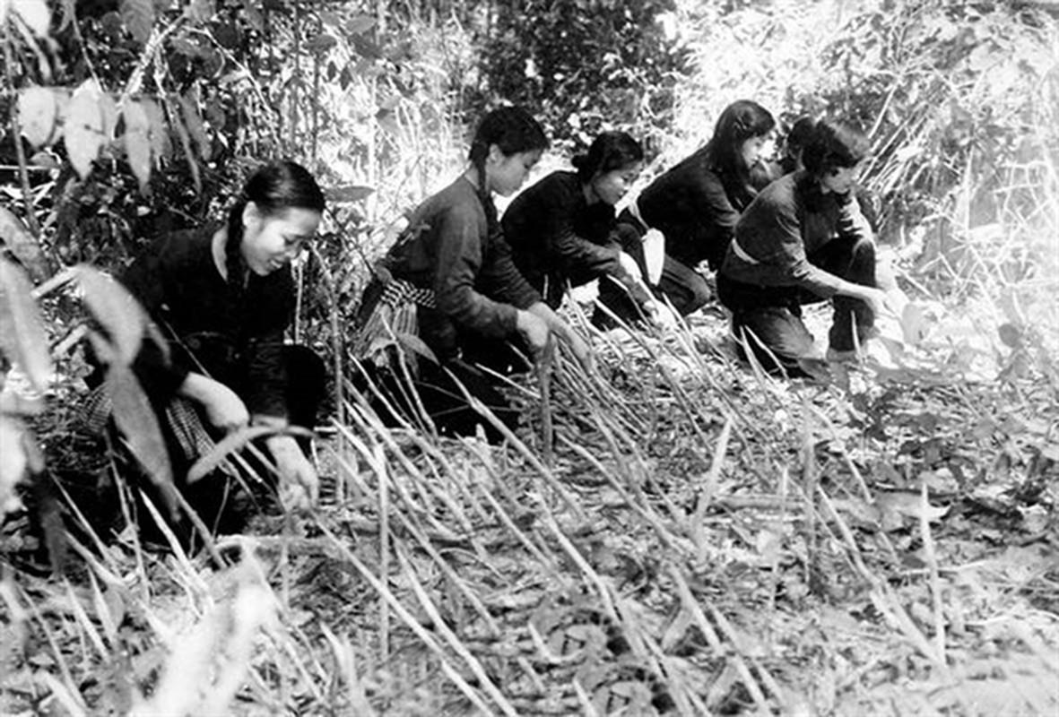"""Nhung """"doc chieu"""" chi co trong chien tranh du kich Viet Nam-Hinh-14"""