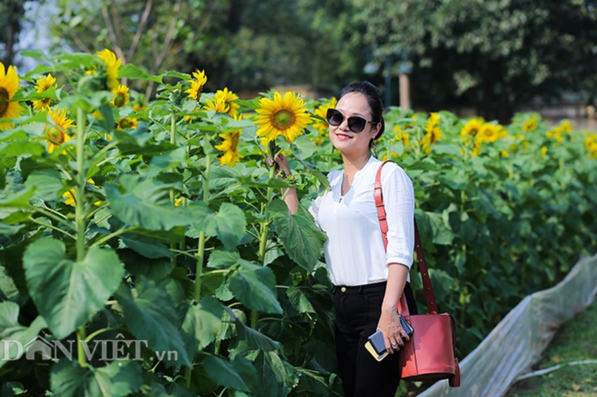 Thieu nu Ha thanh hao huc chup hoa huong duong o thanh Thang Long-Hinh-4