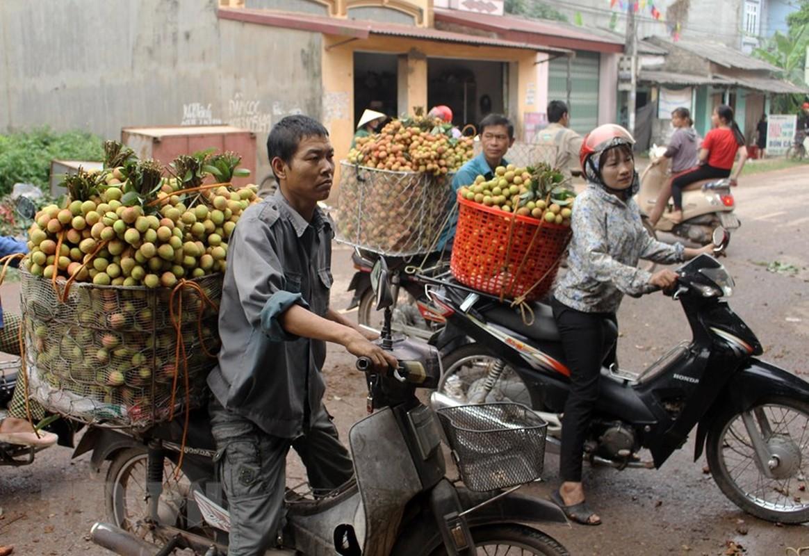 Tin vui cho nguoi nong dan: Vai Phuc Hoa dau mua cua Bac Giang duoc gia-Hinh-4
