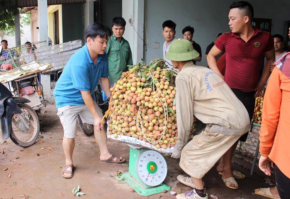 Tin vui cho nguoi nong dan: Vai Phuc Hoa dau mua cua Bac Giang duoc gia-Hinh-5